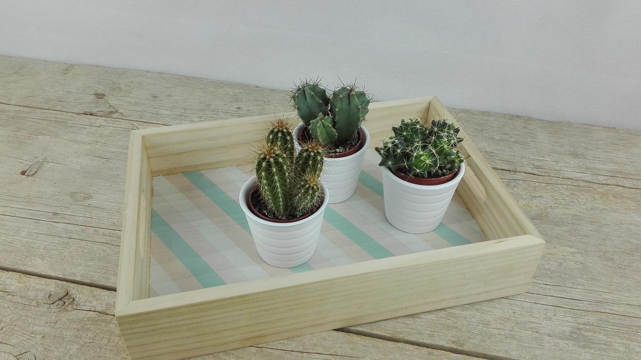 decorar con cactus